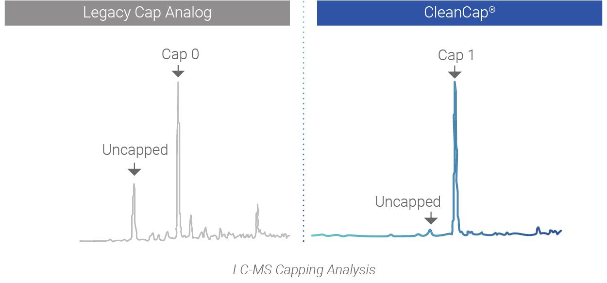 CleanCapWebImage_LCMS