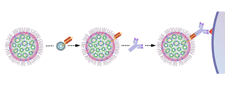 Schematic illustration of the introduction of targeting moiety to mmRNA loaded LNPs. LNPs are mixed with ASSET micelles and coated with Rat IgG2a primary mAb