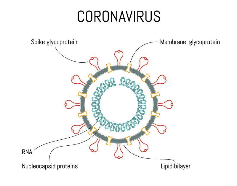 Corona Virus Diagram