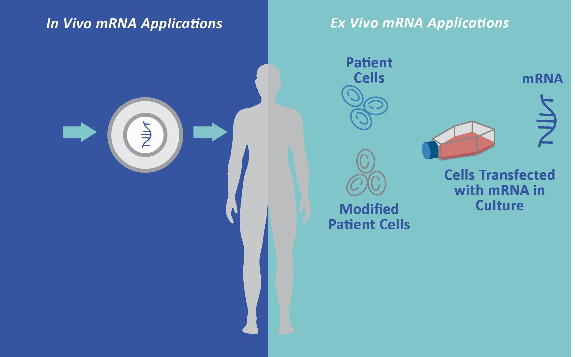 mrna-applications